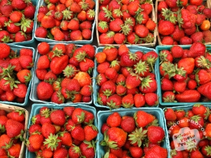strawberry-photo1-m