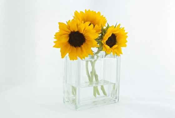 sunflowers sunflower water flowers