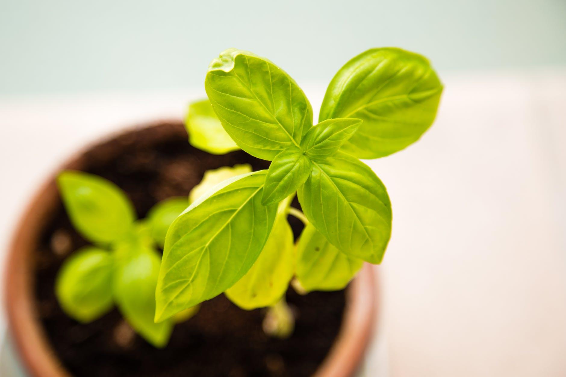 healthy sun plant pot
