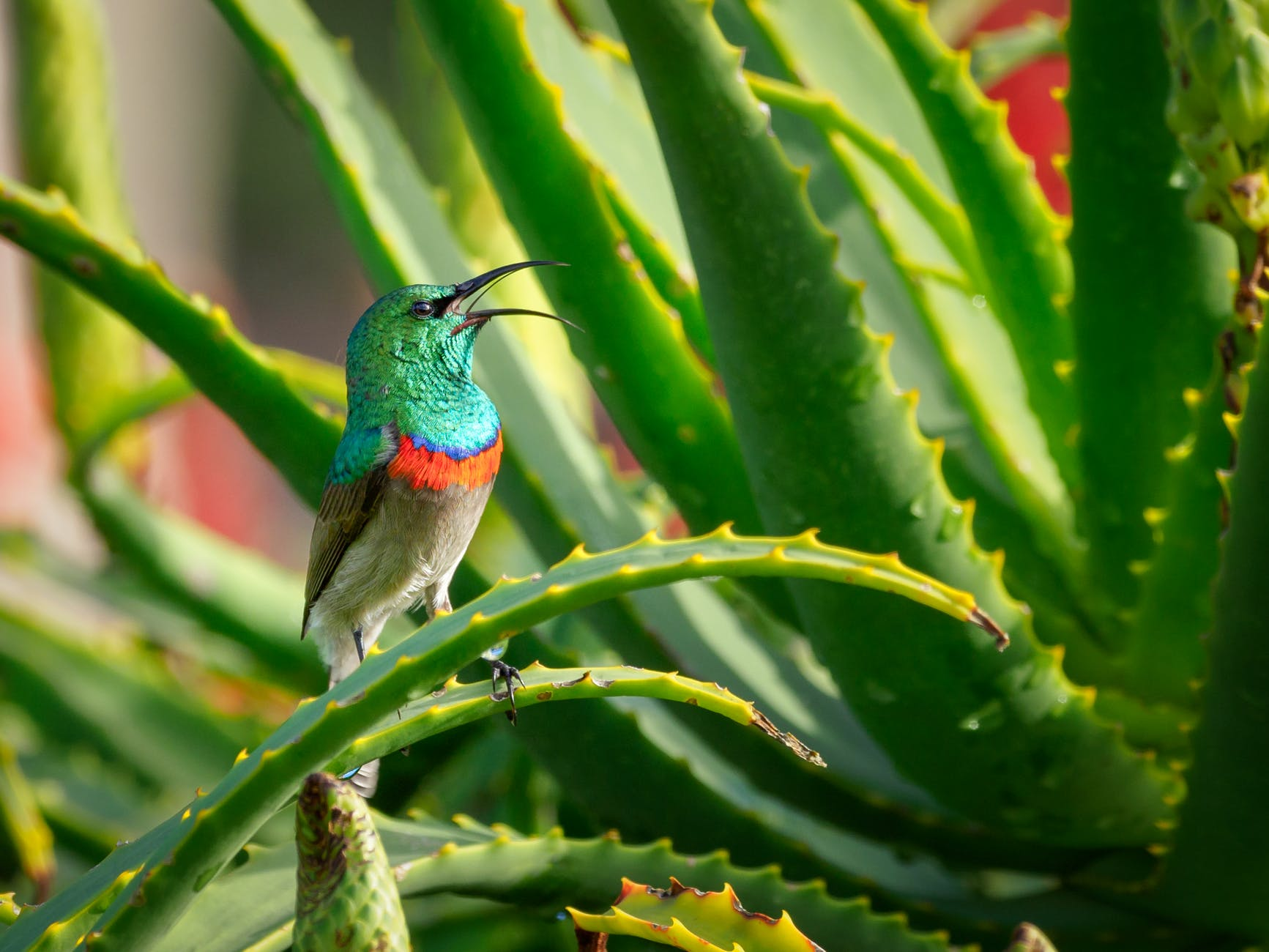 green and gray bird perching on aloe vera plant