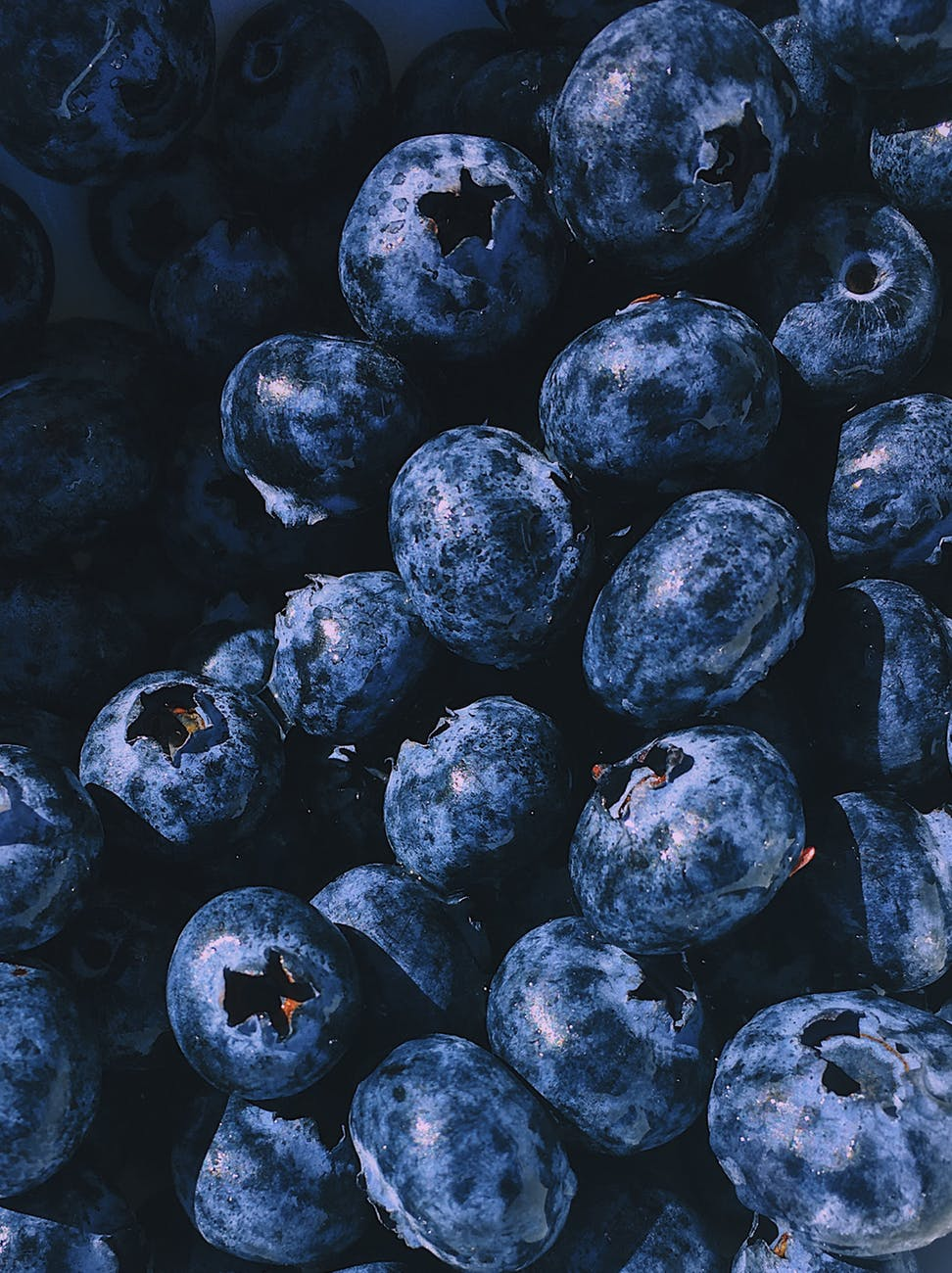 closeup photography blueberry fruits